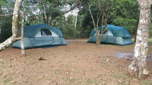 Jungle Lodge Camping & Retreat Photo