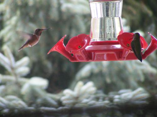 Hummingbird Guesthouse Photo