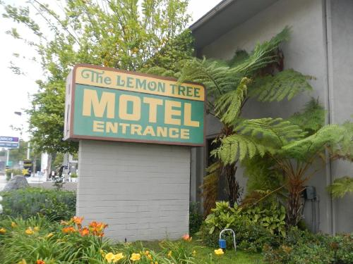 Lemon Tree Motel Photo