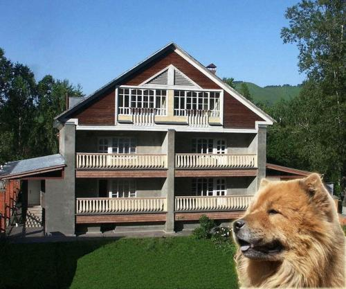 Red Dog Hotel Photo