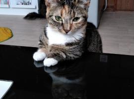Cat Cafe & Stay Cultus's Home, Otaru