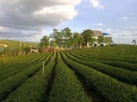 Thiên đường sống ảo - Long Dinh Tea, B'sar Dit