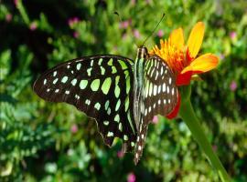 Dream Butterfly Garden Boutique Villa, Siem Reap
