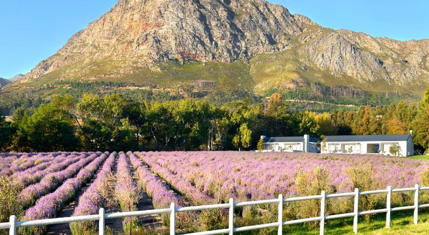 Lavender Farm Guest House 1 Verdun Road Franschhoek