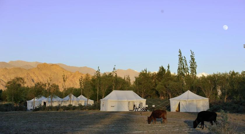 Tsermang Eco Camp Indus River Banks Leh