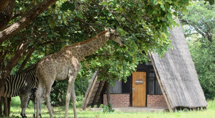 More about Kuti Wildlife Reserve