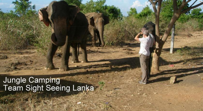 Yala Camping Safari Sightseeing Lanka