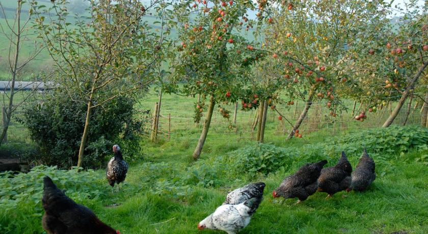 T's B and Bs Lower Rudloe Farm Corsham
