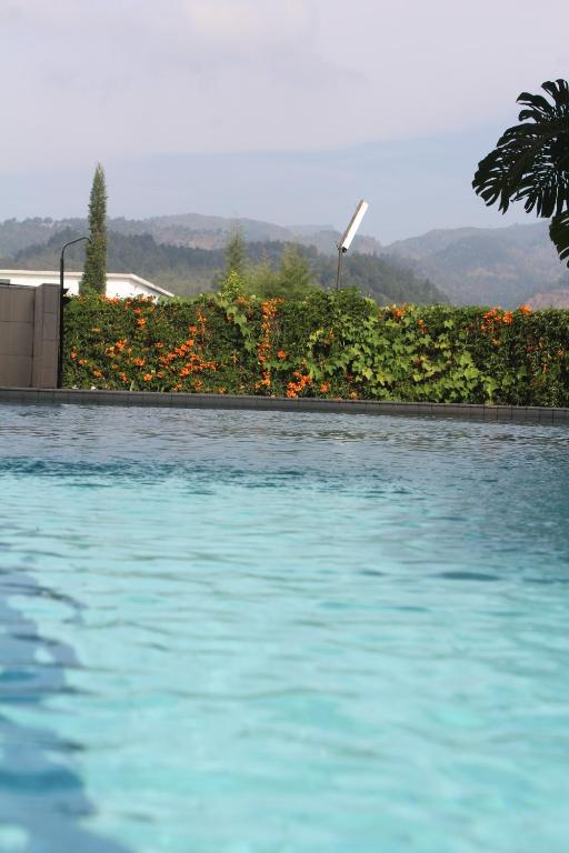 Swimming pool De View Hotel Batu