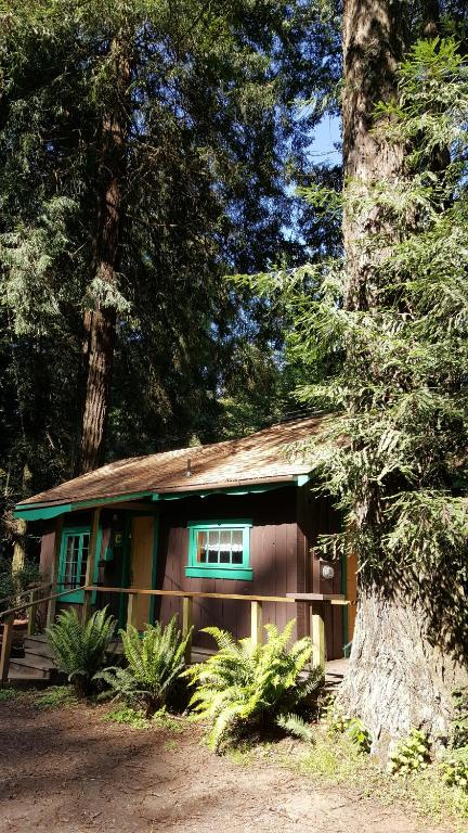 Book Now Emerald Forest Cabins Trinidad United States Rooms Available For All