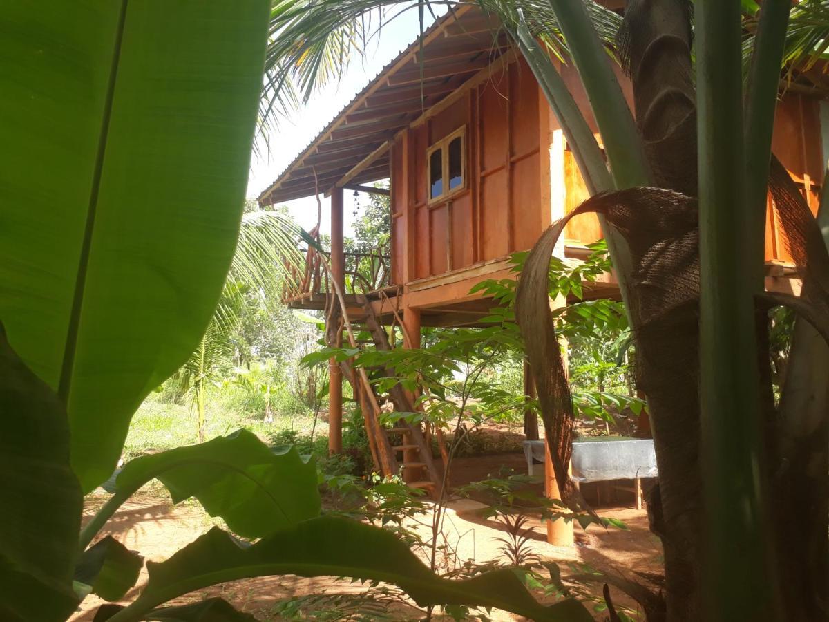 Sigiri Aliya Tree House Photos Opinions Book Now