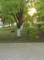 Piroshka Hotel, Penziony - Berehove