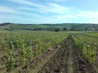 Agriturismo da Remo, Farmy - Magliano in Toscana