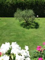 La Querciolaia B&B, Bed and breakfasts - Massa