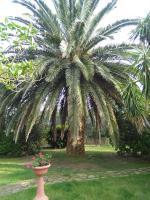 La Palma, Farm stays - Magliano in Toscana