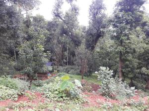 Namma Chikmagaluru NC-GVH, Проживание в семье  Attigundi - big - 30