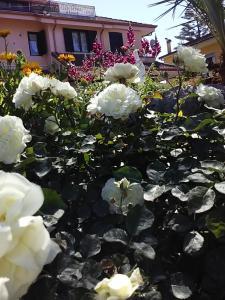 obrázek - La Rosa di Paestum
