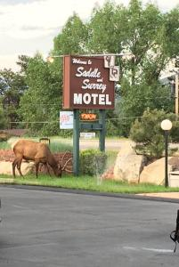 obrázek - Saddle & Surrey Motel