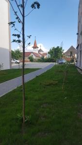 Boson Rent Apartament Sibiu, Apartmány  Sibiu - big - 12