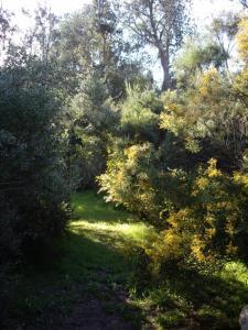 Banksia Cottage, Prázdninové domy  Venus Bay - big - 4
