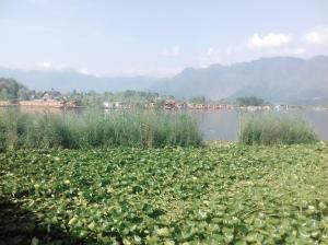 Kashmir View Houseboat, Отели  Сринагар - big - 31