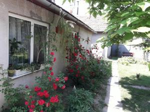 House near Thermal Pool, Nyaralók  Beregszász - big - 13