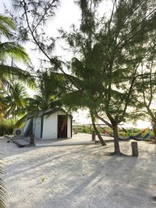 Rhincodon Typus, Hotel  Isola Holbox - big - 26