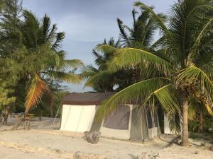 Rhincodon Typus, Hotel  Isola Holbox - big - 25