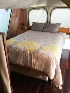 Rhincodon Typus, Hotel  Isola Holbox - big - 21