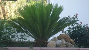 Salakos Home, Holiday homes  Sálakos - big - 10