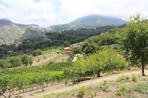 Agriturismo Fattoria di Arieste, Farmy  Maierà - big - 1