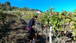 Agriturismo Fattoria di Arieste, Farmy  Maierà - big - 2