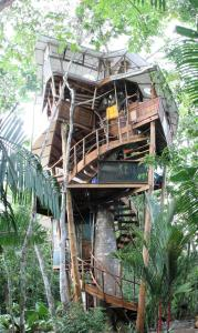 Lapa's Nest Tree House