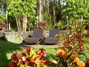 Volcano Mountain Retreat, Bed and breakfasts  Fern Acres - big - 24