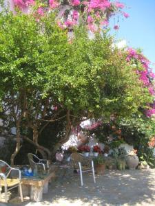 Mochlos Mare, Apartments  Mochlos - big - 15