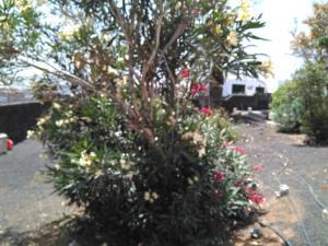 Villa Jasmina, Guest houses  Nazaret - big - 39