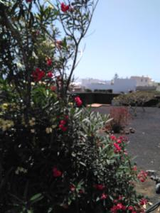 Villa Jasmina, Penziony  Nazaret - big - 37