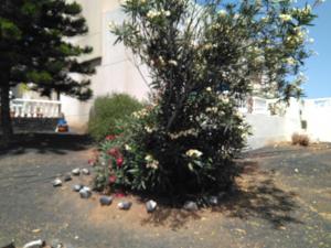 Villa Jasmina, Penziony  Nazaret - big - 36
