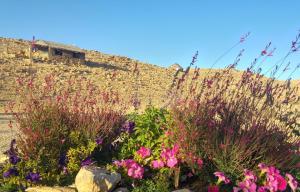 Succah in the Desert