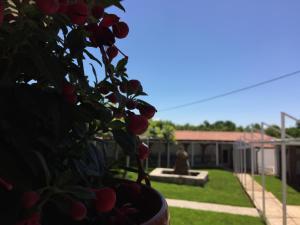 Motel Kiwi - фото 4