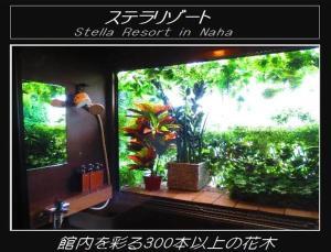 obrázek - Stella Resort