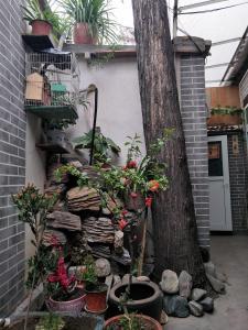 Ji nan International Youth Hostel, Хостелы  Цзинань - big - 4