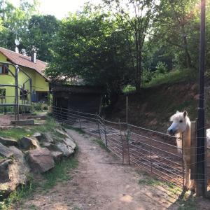 obrázek - Ferienwohnung am Aschbacherhof