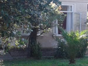 Guest house Begonia, Affittacamere  Darch'eli - big - 5