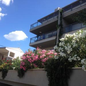 Apartment Božan