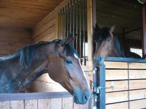 Гостиница Happy horse - фото 6