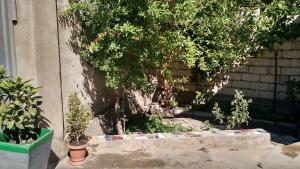 Просторный дом недалеко от центра города, Dovolenkové domy  Tbilisi City - big - 2