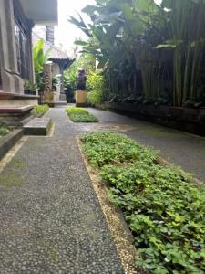 Umah Dajane Guest House, Affittacamere  Ubud - big - 13