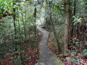 Jungle Track Eco Lodge