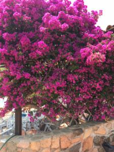 La Playa - Sole e Relax in Sardegna, Apartmanok  Olbia - big - 10
